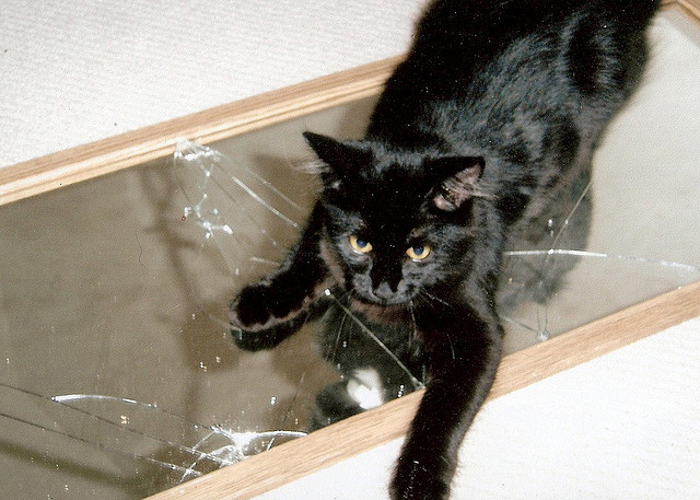 Black Cat and Broken Mirror